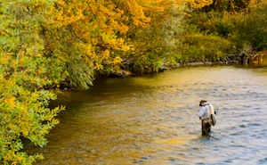 Fly Fisherman on Boise River